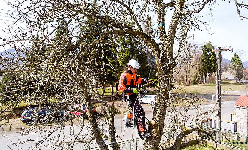 How to Choose a Good Tree Removal Service